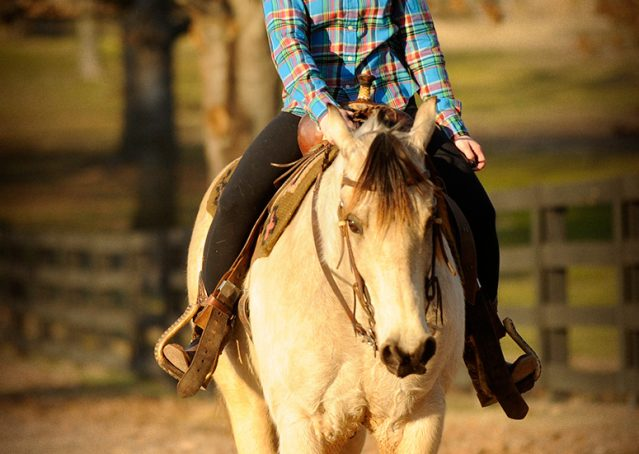 014-Kody-Buckskin-AQHA-Gelding-For-sale