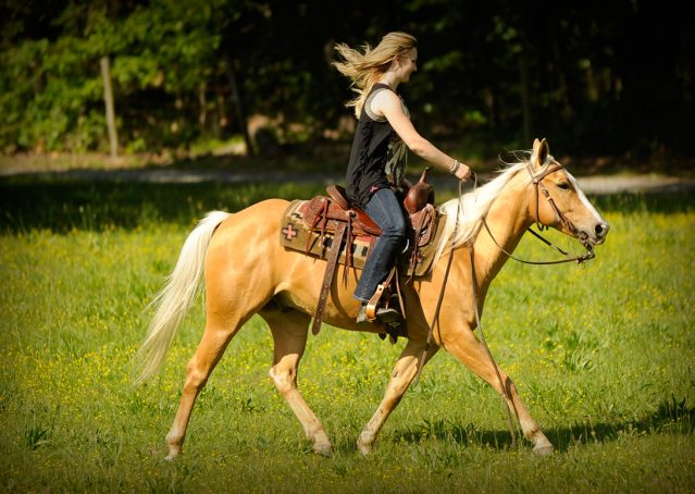 014-Peaches-Palomino-AQHA-Gelding-For-Sale