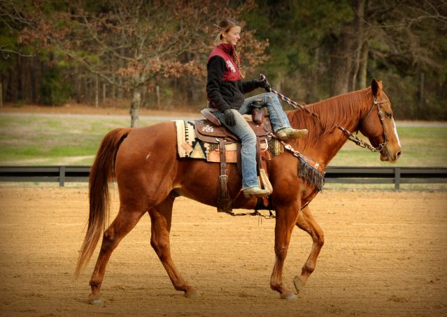 014-Punchy-Sorrel-AQHA-gelding-for-sale