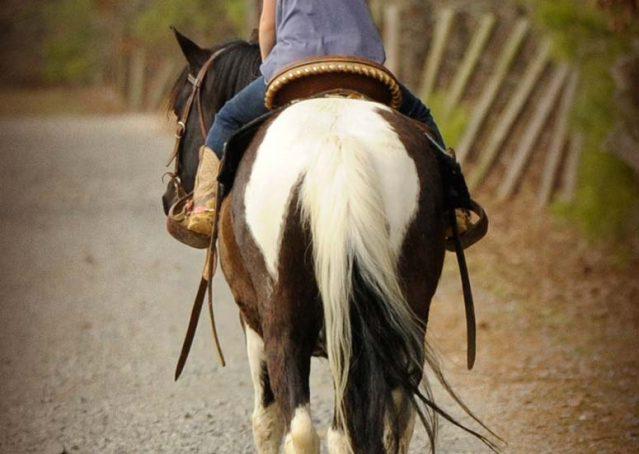 014-Rocky-paint-pony-gelding-for-sale