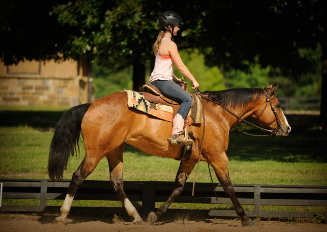 014-Romeo-APHA-for-sale