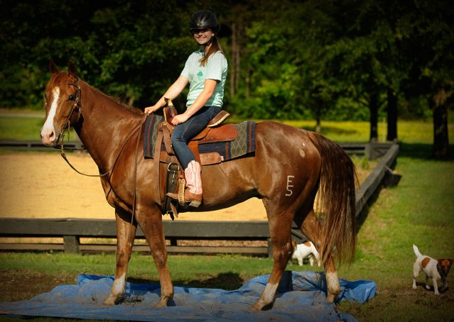 014-Smarty-AQHA-gelding-for-sale (1)