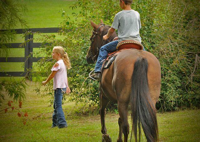 014-Stone-Bay-Quarter-Horse-Gelding-For-Sale