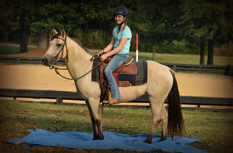 015-Buckskin-Pony-Mare-For-Sale-Jill