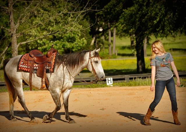 015-Casper-Grey-Quarter-Horse-Gelding-For-Sale