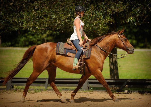 015-Clark-AQHA-horse-for-sale