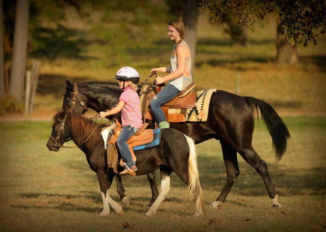 015-Hollywood-AQHA-gelding-for-sale