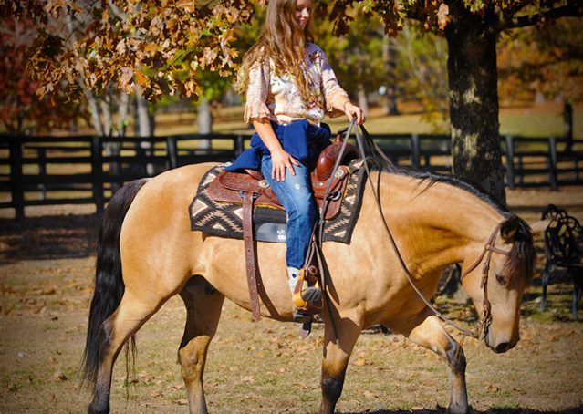 015-Hotrod-AQHA-Buckskin-Gleding-For-Sale