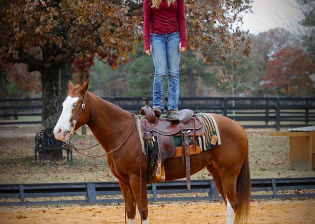 015-Indie-Sorrel-AQHA-reining-horse-for-sale
