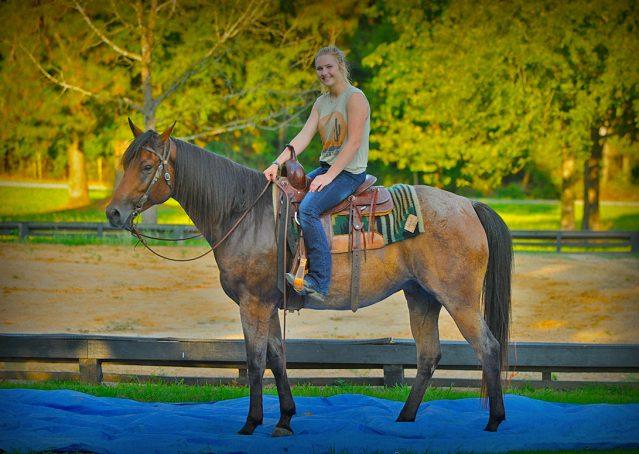 015-Jasper-Bay-Roan-Quarter-horse-gelding-for-sale