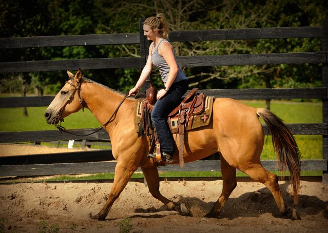 015-Jessie2-Buckskin-Gelding-For-Sale