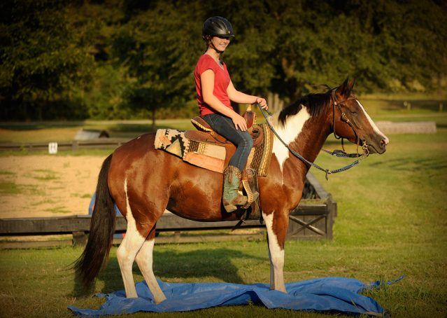 015-Lena-APHA-mare-for-sale