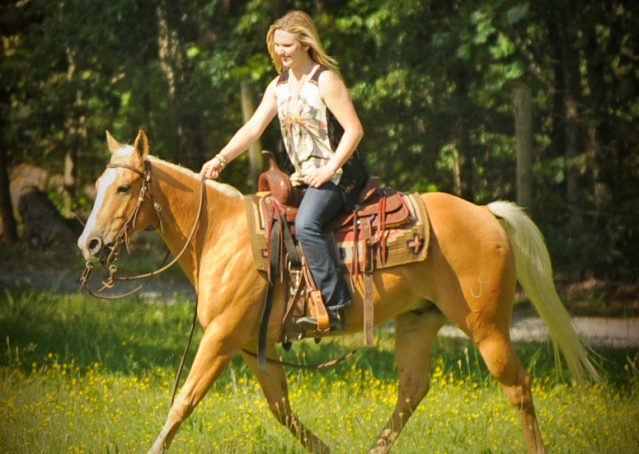 015-Peaches-Palomino-AQHA-Gelding-For-Sale