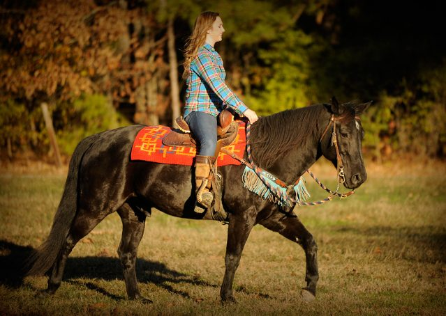 015-Thunder2-black-aqha-gelding-for-sale