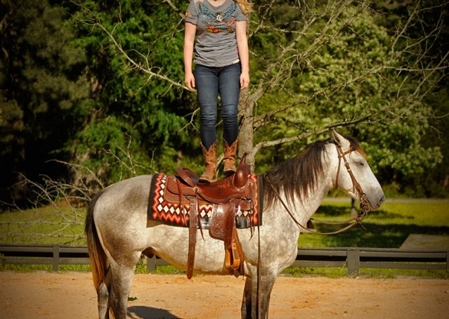 016-Casper-Grey-Quarter-Horse-Gelding-For-Sale
