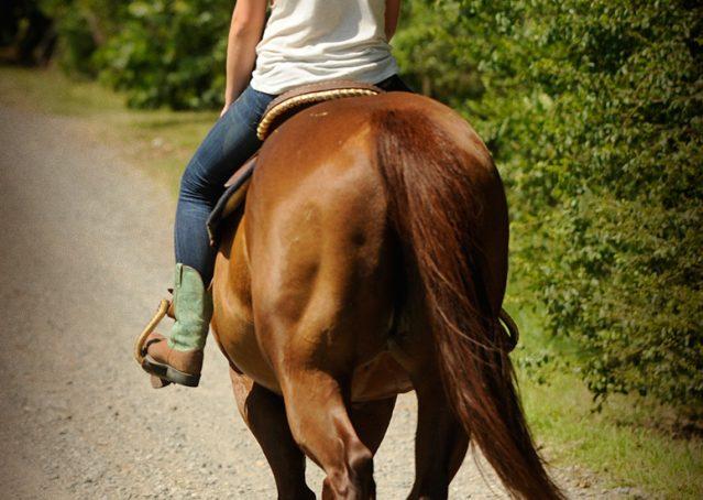 016-Clark-AQHA-horse-for-sale