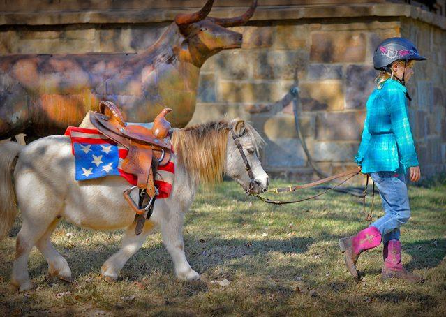 016-Drew-Paint-Mini-Pony-For-Sale