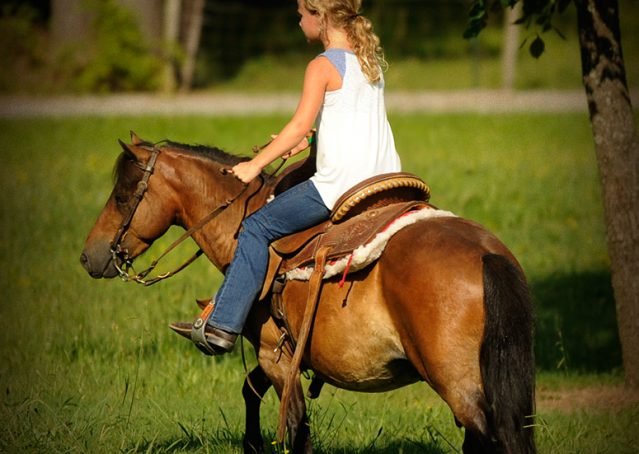 016-Harley-Bay-Pony-Gelding