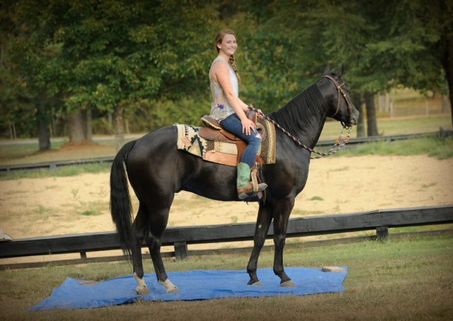 016-Hollywood-AQHA-gelding-for-sale