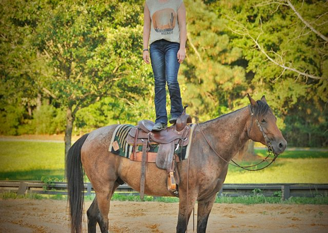 016-Jasper-Bay-Roan-Quarter-horse-gelding-for-sale
