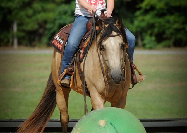 016-Leo3-Buckskin-AQHA-Gelding-For-Sale