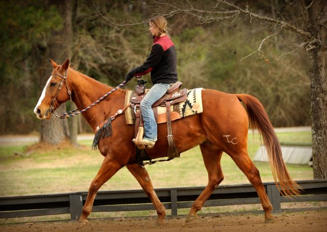 016-Punchy-Sorrel-AQHA-gelding-for-sale