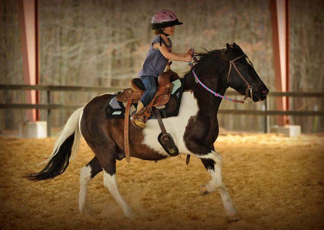 016-Rocky-paint-pony-gelding-for-sale