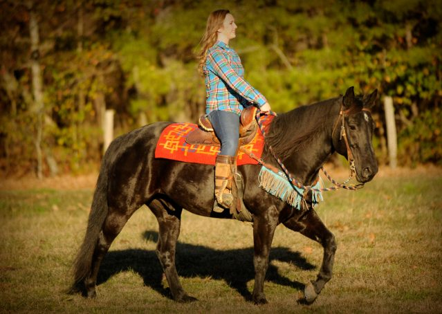 016-Thunder2-black-aqha-gelding-for-sale