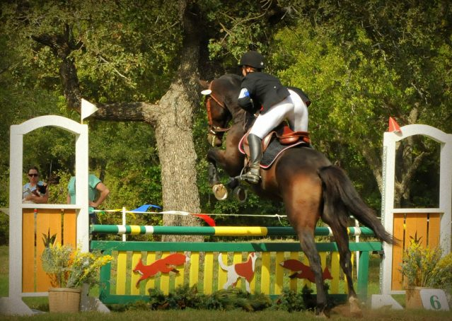 017-Beijing-dutch-warmblood-for-sale