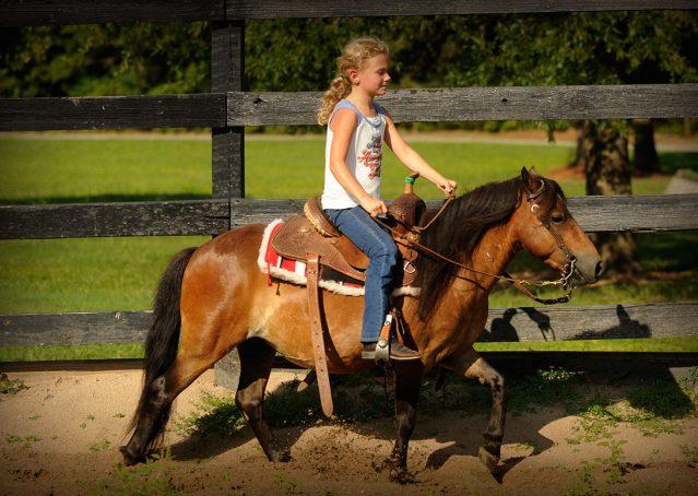 017-Harley-Bay-Pony-Gelding