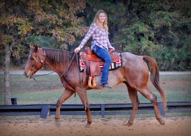 017-Jack-Frost-AQHA-Red-Roan-Gelding-For-Sale