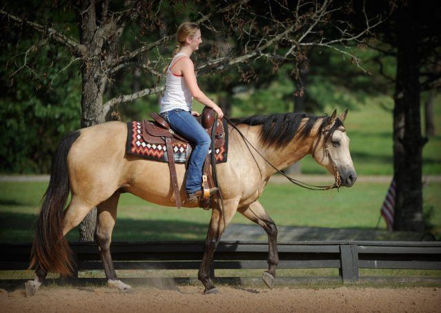 017-Leo3-Buckskin-AQHA-Gelding-For-Sale