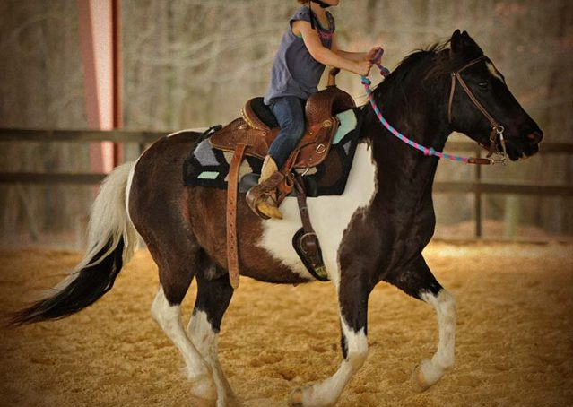 017-Rocky-paint-pony-gelding-for-sale