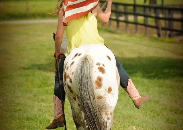 017-Shy-appaloosa-pony-for-sale