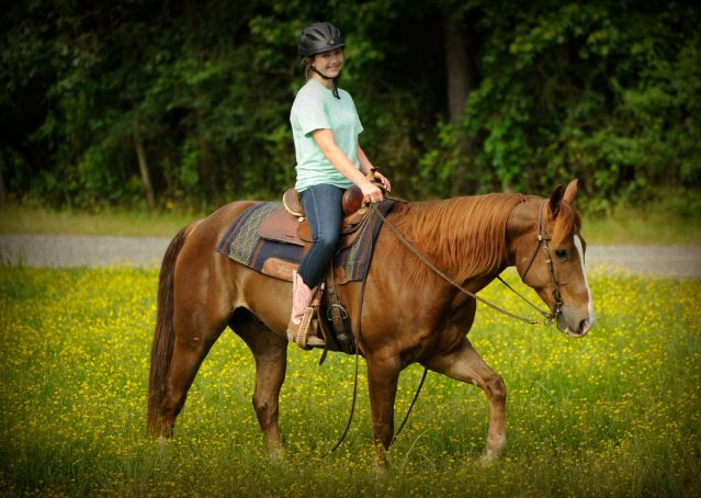 017-Smarty-AQHA-gelding-for-sale (1)