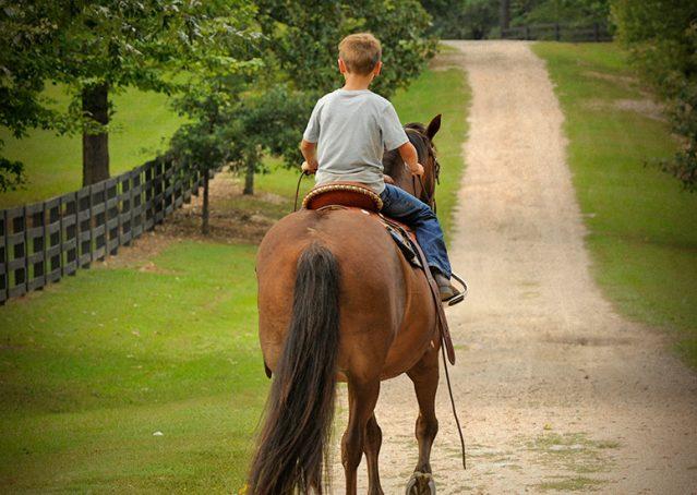 017-Stone-Bay-Quarter-Horse-Gelding-For-Sale
