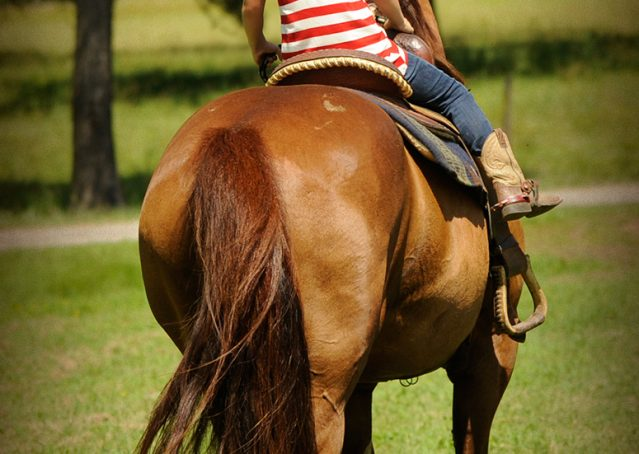 018-Clark-AQHA-horse-for-sale
