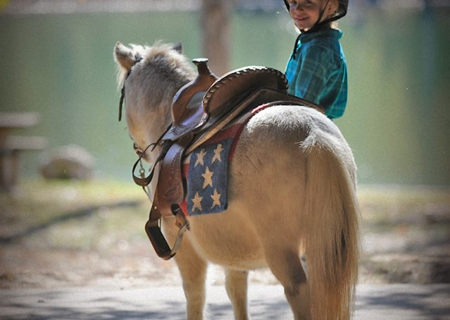018-Drew-Paint-Mini-Pony-For-Sale