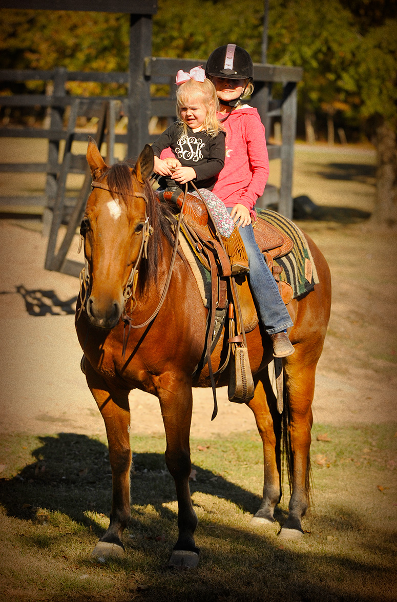 018-Dually2-Bay-AQHA-Gelding-For-Sale