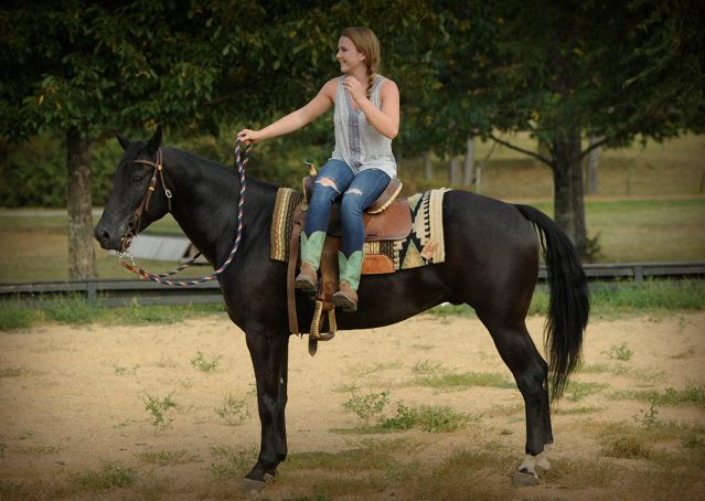018-Hollywood-AQHA-gelding-for-sale
