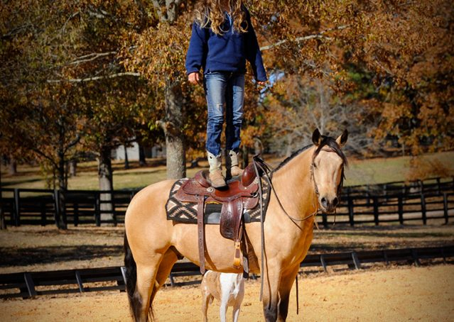 018-Hotrod-AQHA-Buckskin-Gleding-For-Sale