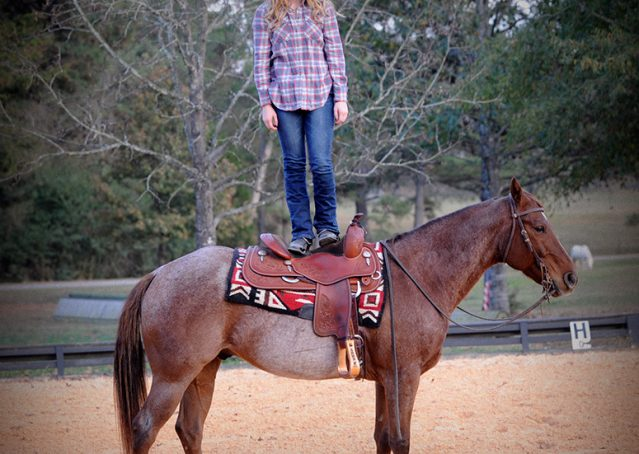 018-Jack-Frost-AQHA-Red-Roan-Gelding-For-Sale