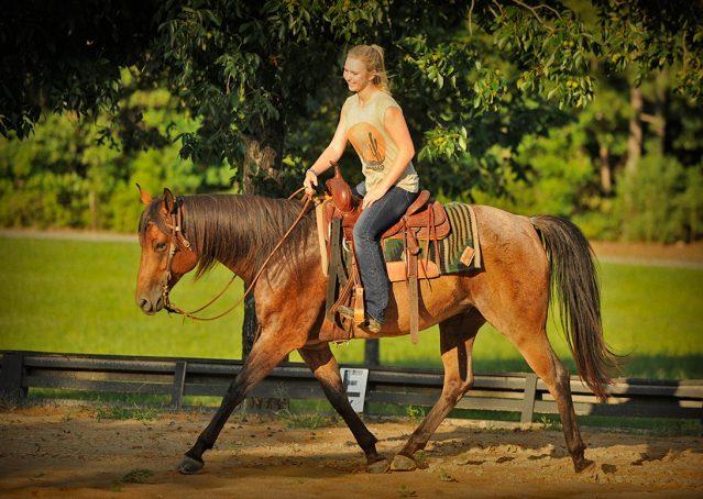 018-Jasper-Bay-Roan-Quarter-horse-gelding-for-sale