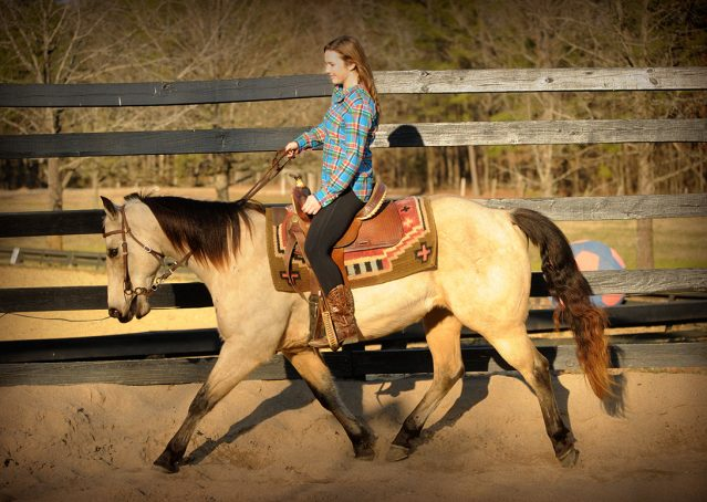 018-Kody-Buckskin-AQHA-Gelding-For-sale