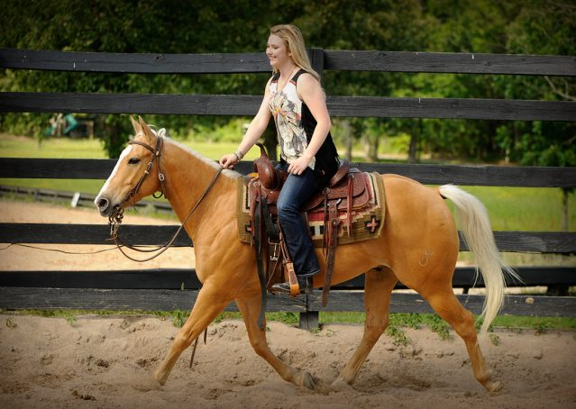 018-Peaches-Palomino-AQHA-Gelding-For-Sale