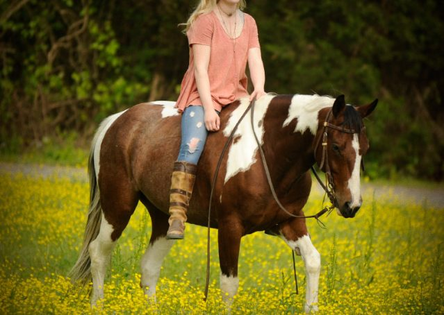 018-Rebel-APHA-Bay-Tobiano-Gelding-For-Sale