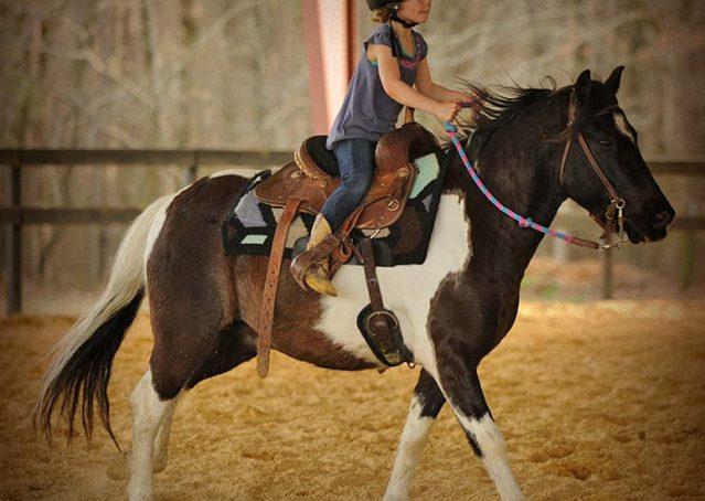 018-Rocky-paint-pony-gelding-for-sale