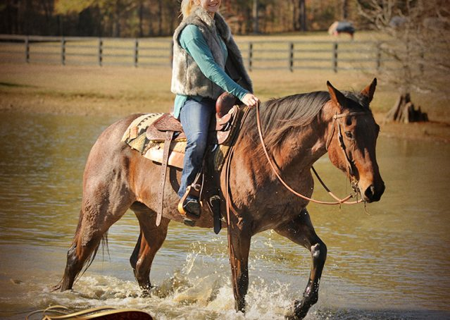018-Romey-Bay-Roan-Gelding-For-Sale