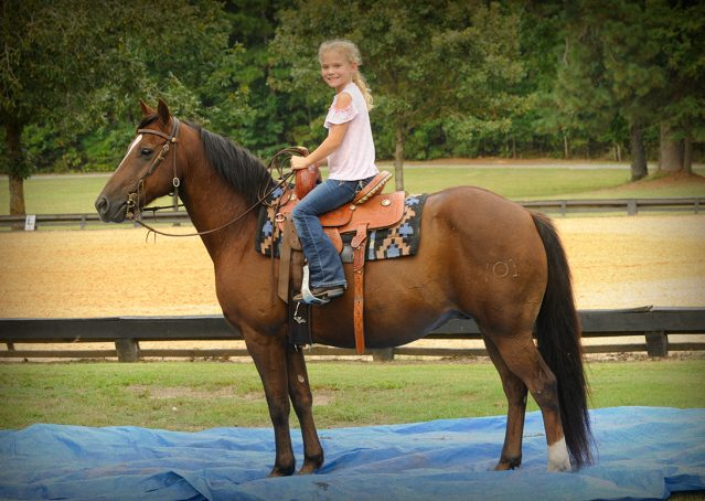 018-Stone-Bay-Quarter-Horse-Gelding-For-Sale