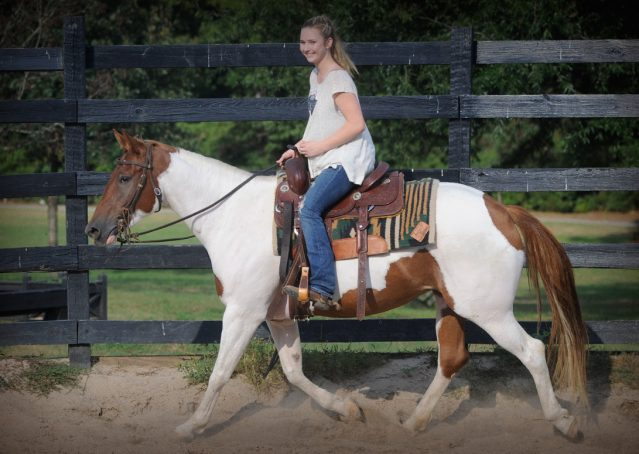 019-Amiga-APHA-Mare-For-Sale